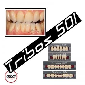 dientes acrilicos tribos 501